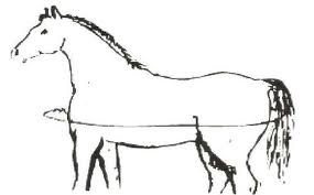 Measuring Your Horse for the CuHorse Blanket