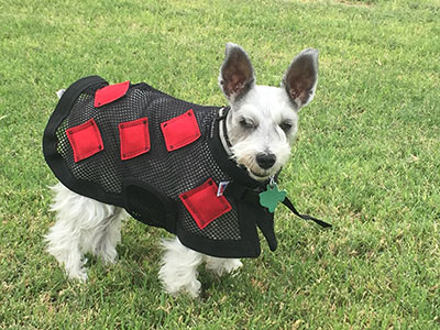 MagnaDog with red squares